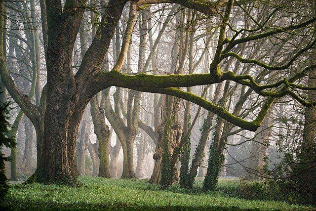 forest-3287976_640.jpg
